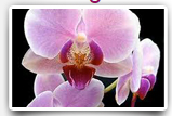 orchid paCKAGE